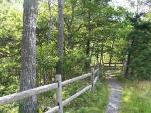 path-82841_960_720